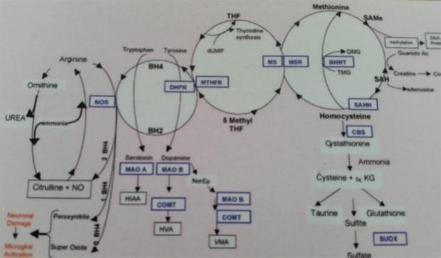 mthfr-methylation-health